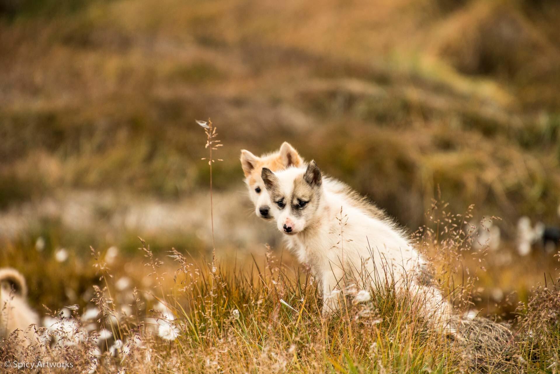 DER DONNER DES BLAUEN EISES - GRÖNLAND 2017 - Teil 2: Heilbutt und Huskies
